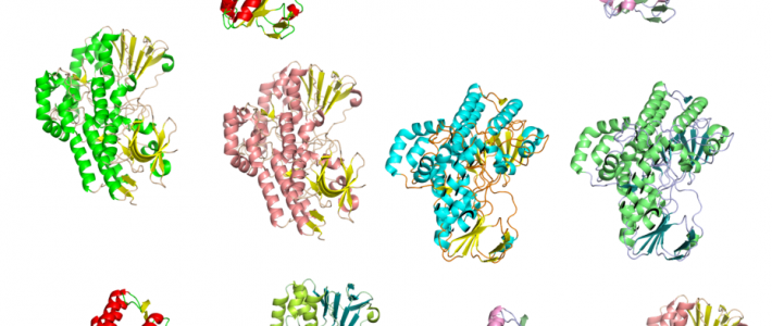 Structural Bioinformatics for unveiling the chemical diversity of enzyme families