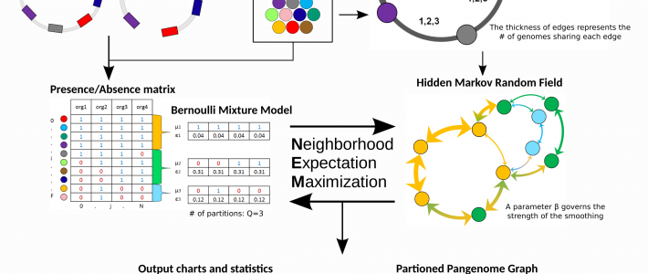 Conceptualization and exploitation of a partitioned pangenome graph as a compact representation dedicated to the characterization of the diversity of the genomic repertoire of a bacterial species