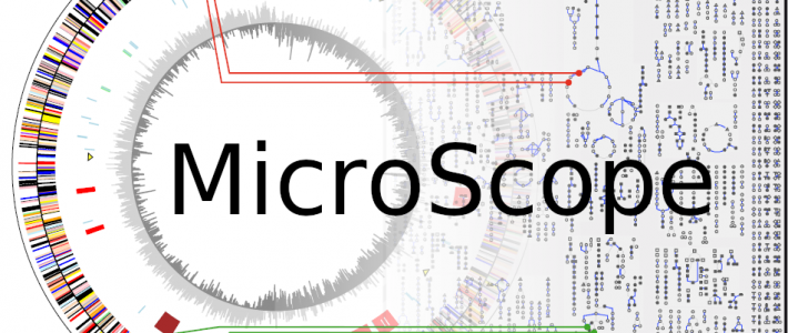 Prediction, annotation and exploration of genomic regions in MicroScope