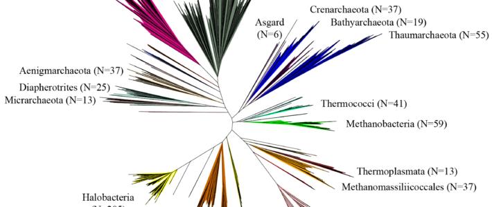 Archaea phylogeny